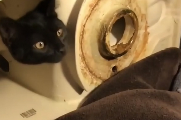 Kitten in Toilet